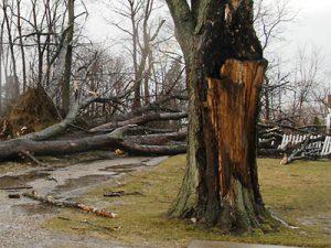 Recognizing Tree Hazards
