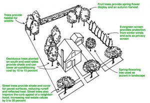 Trees provide numerous aesthetic and economic benefits