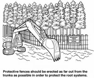 Protective fences should be far from trunks
