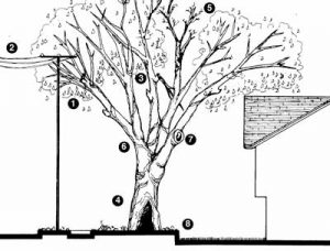 Defects in Urban Trees