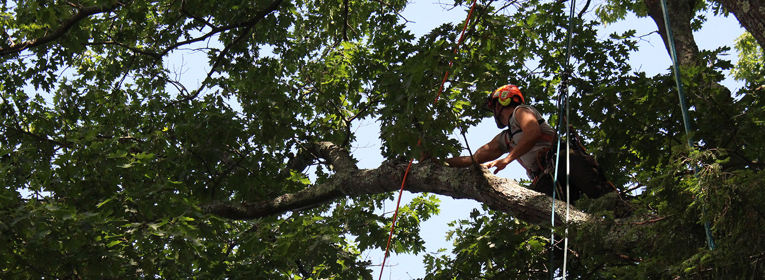 Tree Services for Western Vermont