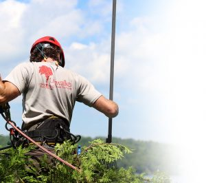 At Limbwalker Tree Service in Vermont, we truly care about our customers, the environment and tree conservation