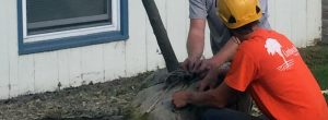 Vermont's Tree Planting Experts