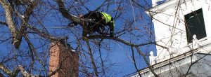 Vermont's Tree Pruning Specialists