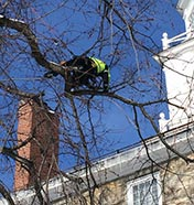 Pruning a tree near a building