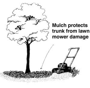 Mulch protects from lawn mower damage