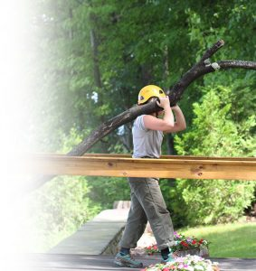 Limbwalker tree specialist in Western Vermont carries a large tree limb